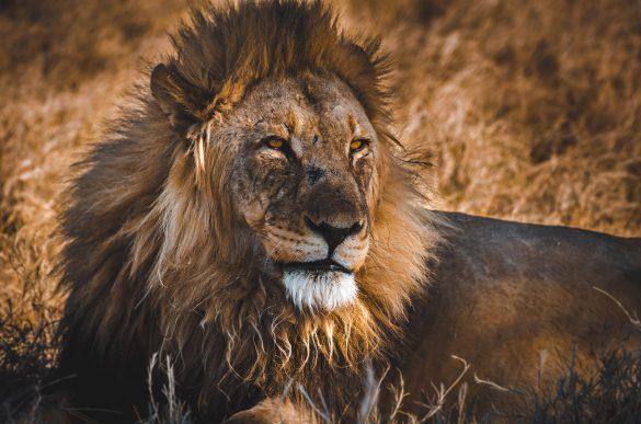 Geen zorgen Hakuna Matata zorg bang angst toekomst jezus bijbel no worries lion king leeuw
